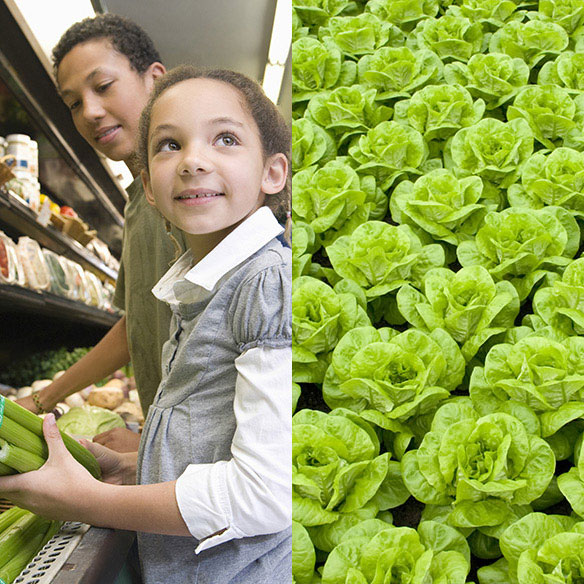 Children Shopping - Field of Lettuce